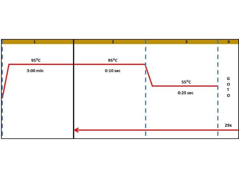 Polymerase Chain Reaction (PCR) image for Met Proto-Oncogene (MET) ELISA Kit (ABIN5680031)