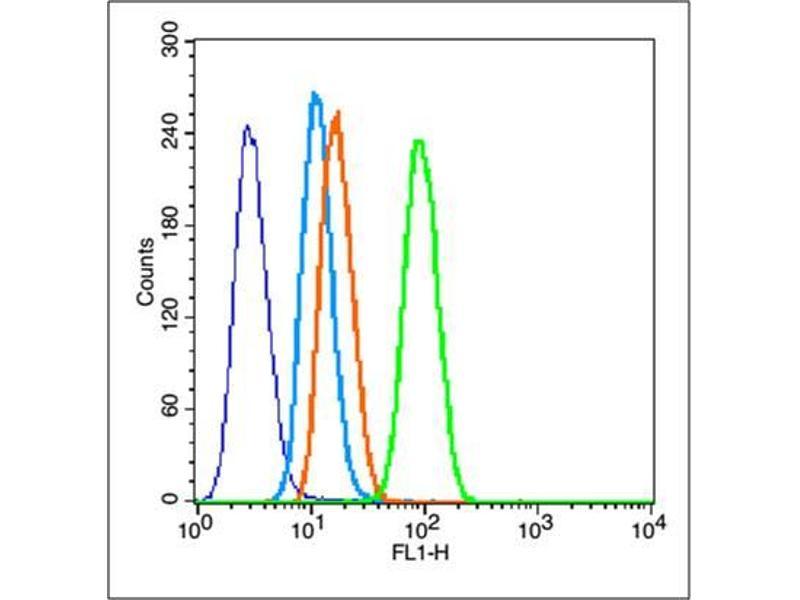image for anti-Matrix Metalloproteinase 2 (MMP2) (AA 20-70) antibody (ABIN668286)
