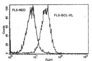 Image no. 1 for anti-BCL2L1 antibody (BCL2-Like 1)  (FITC) (ABIN135022)