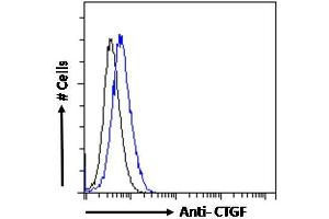 Image no. 2 for anti-Connective Tissue Growth Factor (CTGF) (Internal Region) antibody (ABIN6391344)