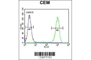Image no. 2 for anti-Glycoprotein M6B (GPM6B) (AA 1-30), (N-Term) antibody (ABIN655821)