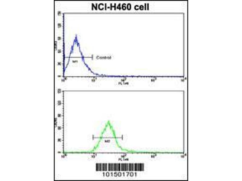 Flow Cytometry (FACS) image for anti-PTK7 Protein tyrosine Kinase 7 (PTK7) (AA 21-52), (N-Term) antibody (ABIN392230)