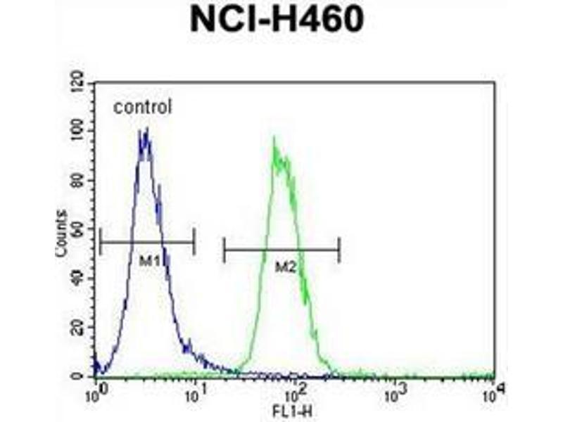 Flow Cytometry (FACS) image for anti-Forkhead Box D4-Like 1 (FOXD4L1) (AA 1-30), (N-Term) antibody (ABIN952365)