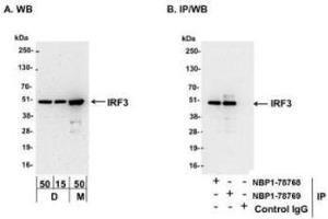 Western Blotting (WB) image for anti-Interferon Regulatory Factor 3 (IRF3) (AA 375-419) antibody (ABIN4327553)
