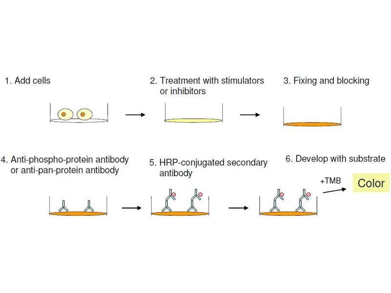 image for MAP kinase p38 (p38) ELISA Kit (ABIN1981835)