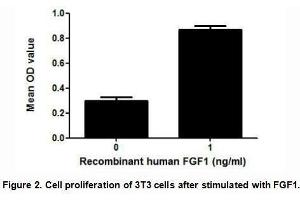 Image no. 2 for Fibroblast Growth Factor 1 (Acidic) (FGF1) (AA 1-155) (Active) protein (His tag,GST tag) (ABIN6239784)