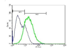 Flow Cytometry (FACS) image for anti-EPH Receptor A7 antibody (EPHA7) (AA 203-253) (ABIN722005)