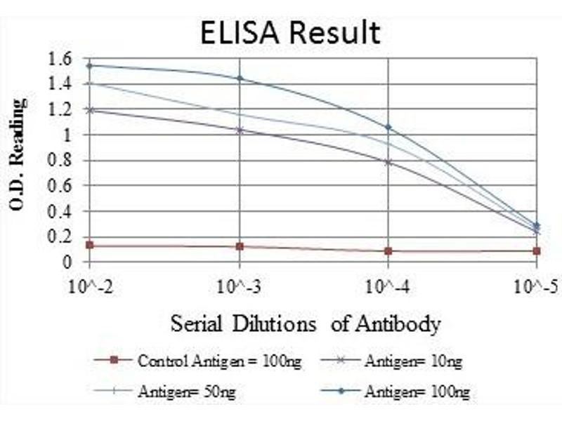 ELISA image for anti-Nuclear Factor of kappa Light Polypeptide Gene Enhancer in B-Cells 1 (NFKB1) antibody (ABIN1108443)