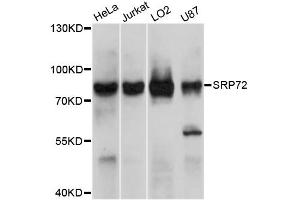 Image no. 1 for anti-Signal Recognition Particle 72kDa (SRP72) antibody (ABIN4905300)