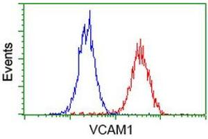 Image no. 3 for anti-Vascular Cell Adhesion Molecule 1 (VCAM1) antibody (ABIN1497154)