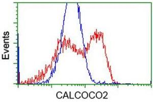 Image no. 1 for anti-Calcium Binding and Coiled-Coil Domain 2 (CALCOCO2) antibody (ABIN1497075)