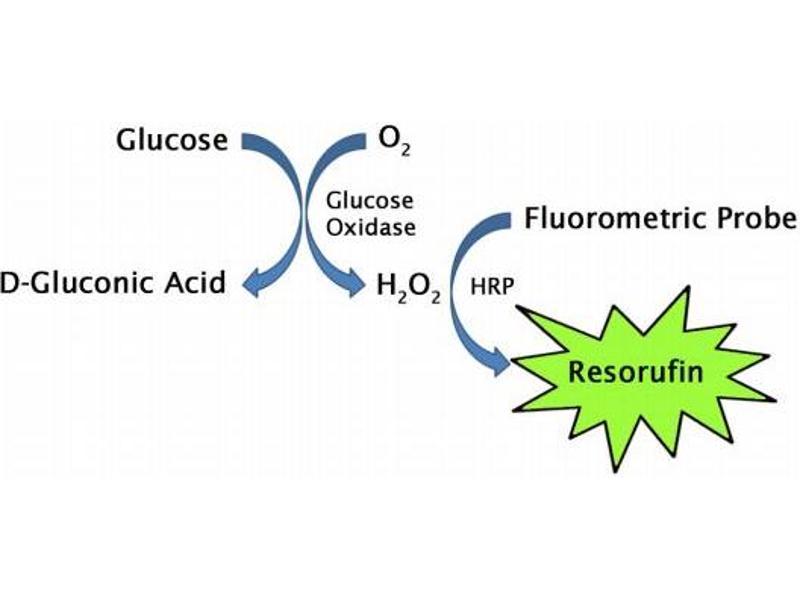 image for Glucose Assay Kit (Fluorometric) (ABIN5067616)