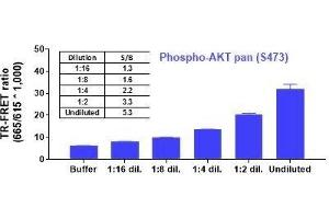 Image no. 2 for Phospho-AKT pan (S473) and Total AKT pan TR-FRET Cellular Assay Kit (ABIN6938951)