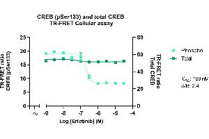 Image no. 2 for Phospho-CREB (S133) and Total CREB TR-FRET Cellular Assay Kit (ABIN6938956)