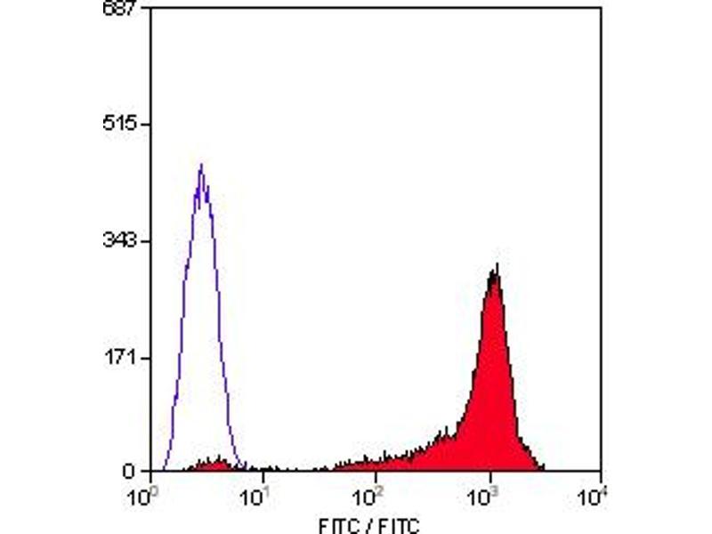 CD90 antibody ABIN118256