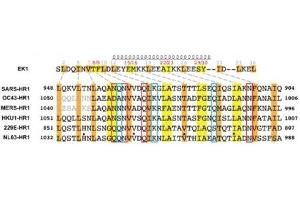Image no. 1 for SARS-CoV-2 Spike peptide (Cy5) (ABIN6952486)