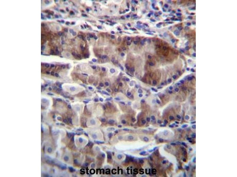Immunohistochemistry (Paraffin-embedded Sections) (IHC (p)) image for anti-Neurensin 2 (NRSN2) (AA 135-165), (C-Term) antibody (ABIN953659)