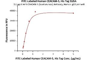 Image no. 1 for Carcinoembryonic Antigen-Related Cell Adhesion Molecule 5 (CEACAM5) (AA 35-685) (Active) protein (His tag,FITC) (ABIN6973027)