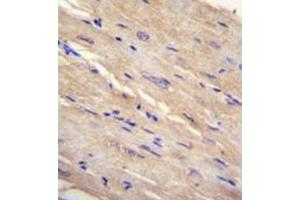 Image no. 1 for anti-Family with Sequence Similarity 69, Member B (FAM69B) (AA 114-144), (N-Term) antibody (ABIN952241)