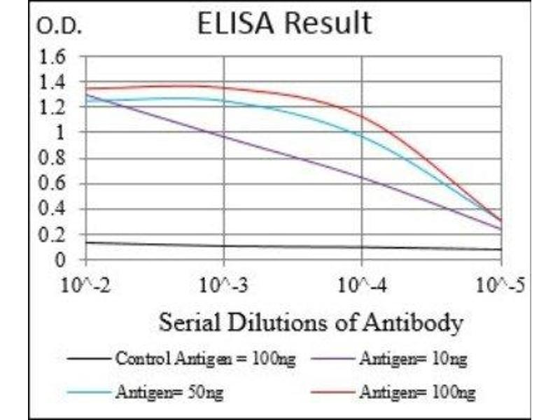 ELISA image for anti-BDNF antibody (Brain-Derived Neurotrophic Factor) (ABIN4283817)