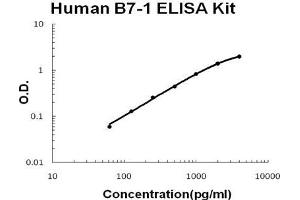 ELISA image for CD80 ELISA Kit (CD80) (ABIN1672777)