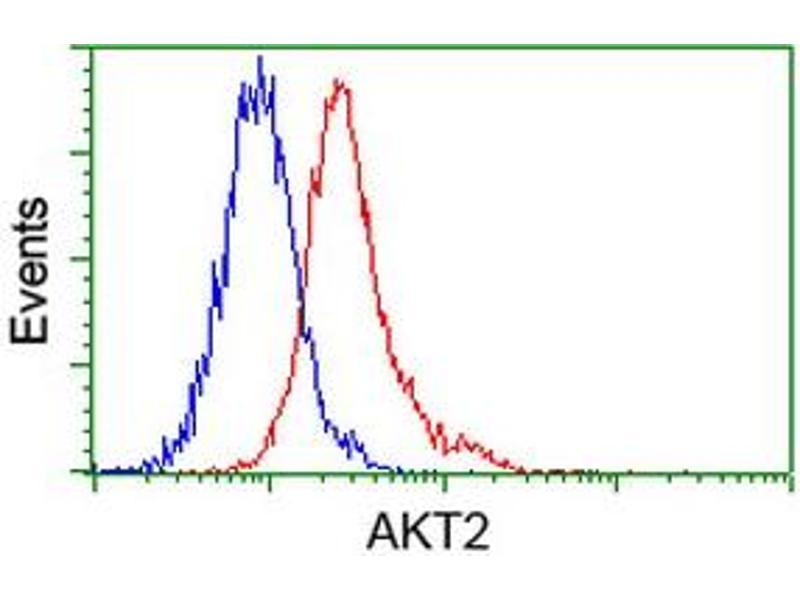 image for anti-V-Akt Murine Thymoma Viral Oncogene Homolog 2 (AKT2) antibody (ABIN1496564)