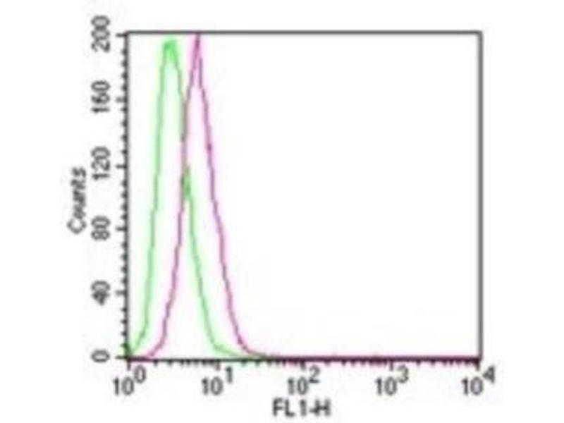 Flow Cytometry (FACS) image for anti-IKBKB antibody (Inhibitor of kappa Light Polypeptide Gene Enhancer in B-Cells, Kinase beta) (ABIN4324301)