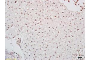 Image no. 4 for anti-Paired Box 6 (PAX6) (AA 54-103) antibody (ABIN1387454)