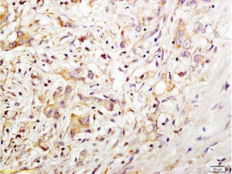 Immunohistochemistry (Paraffin-embedded Sections) (IHC (p)) image for anti-CD34 Molecule (CD34) (AA 240-280) antibody (ABIN676898)