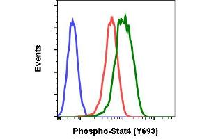 Image no. 1 for anti-Signal Transducer and Activator of Transcription 4 (STAT4) (pTyr693) antibody (ABIN5671190)