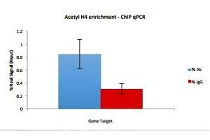 Image no. 1 for AcH4 Antibody with Positive Primer Set (ABIN3071717)