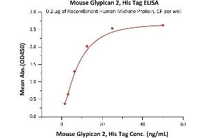 Image no. 1 for Glypican 2 (GPC2) (AA 22-556) (Active) protein (His tag) (ABIN6938871)