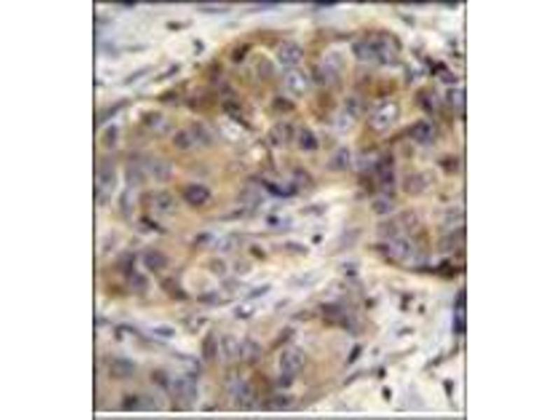 Immunohistochemistry (Paraffin-embedded Sections) (IHC (p)) image for anti-Glutathione Reductase (GSR) (AA 387-416), (C-Term) antibody (ABIN952543)