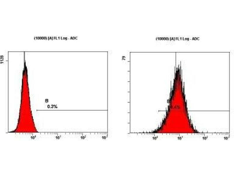 Flow Cytometry (FACS) image for anti-Thiosulfate Sulfurtransferase, SSEA-3 (SSEA-3) antibody (ABIN250526)