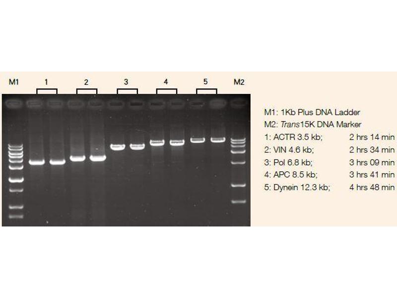 image for TransStart® FastPfu DNA Polymerase (ABIN5519528)