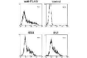 Flow Cytometry (FACS) image for anti-Caspase 4 antibody (Caspase 4, Apoptosis-Related Cysteine Peptidase) (ABIN2745523)
