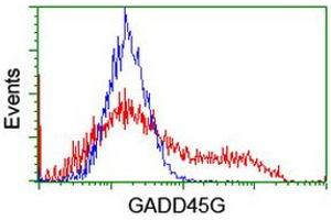 Image no. 2 for anti-Growth Arrest and DNA-Damage-Inducible, gamma (GADD45G) antibody (ABIN1497602)