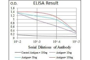 ELISA image for anti-TGFB1 antibody (Transforming Growth Factor, beta 1) (AA 62-195) (ABIN969570)