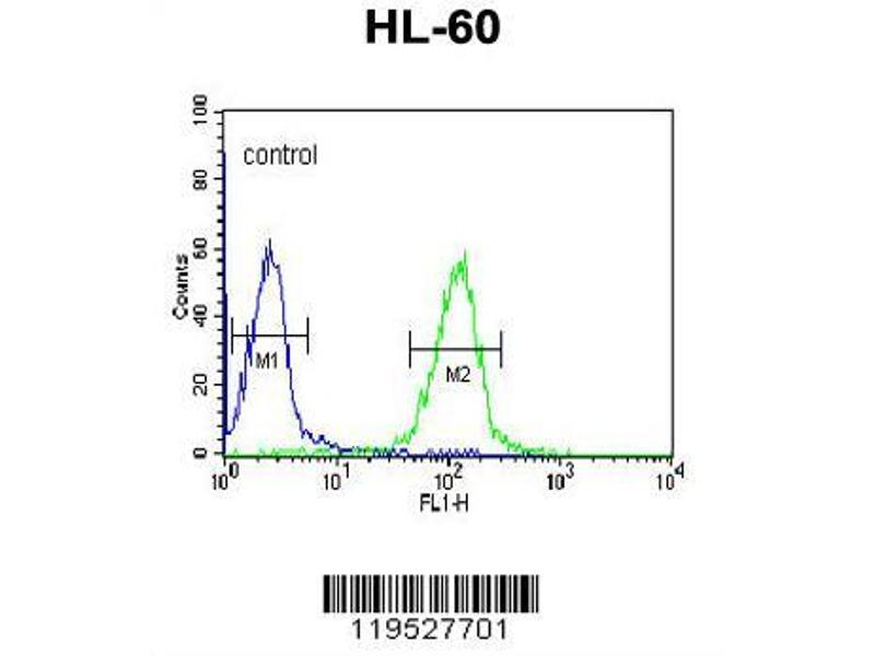 Flow Cytometry (FACS) image for anti-HLA Class II DR alpha (HLA-DRA) (AA 149-177), (C-Term) antibody (ABIN390771)