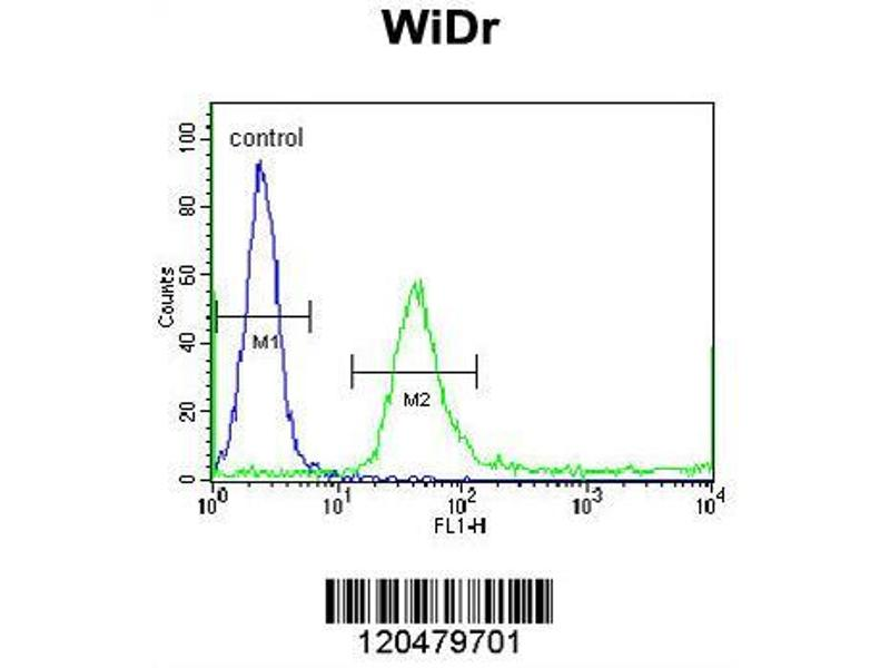 Flow Cytometry (FACS) image for anti-IGFBP4 antibody (Insulin-Like Growth Factor Binding Protein 4) (AA 66-92) (ABIN390928)