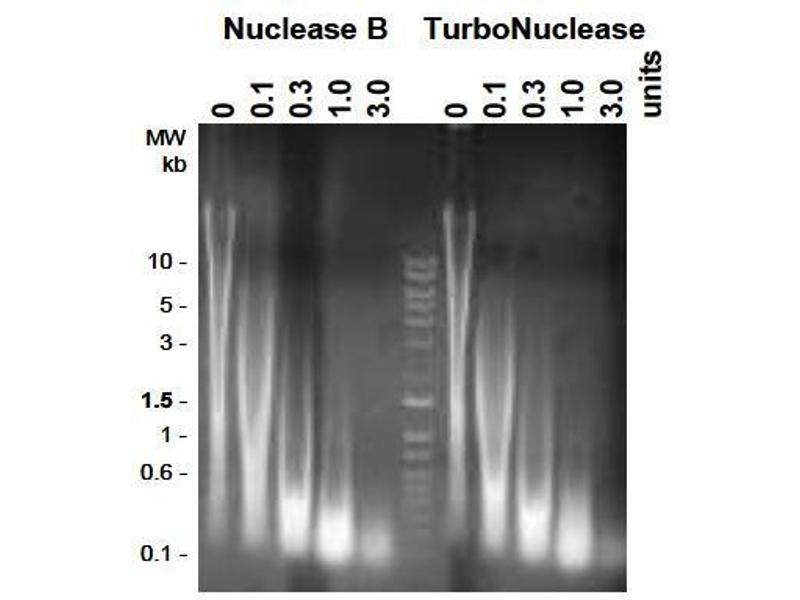 Polymerase Chain Reaction (PCR) image for TurboNuclease (ABIN2506908)
