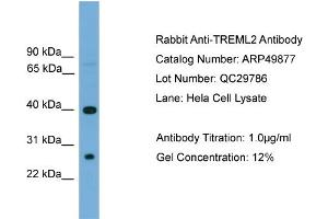 Image no. 2 for anti-Triggering Receptor Expressed On Myeloid Cells-Like 2 (TREML2) (N-Term) antibody (ABIN2783948)