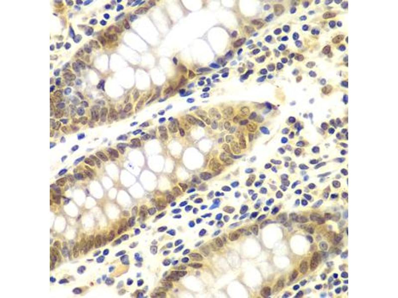 Image no. 3 for anti-Guanine Nucleotide Binding Protein (G Protein), beta Polypeptide 2-Like 1 (GNB2L1) antibody (ABIN6567935)