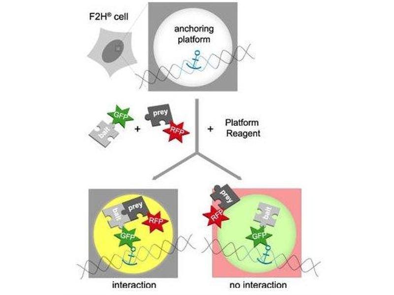 image for Platform Reagent (ABIN1889497)