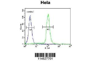 Flow Cytometry (FACS) image for anti-Growth Differentiation Factor 6 (GDF6) (AA 31-59), (N-Term) antibody (ABIN655618)