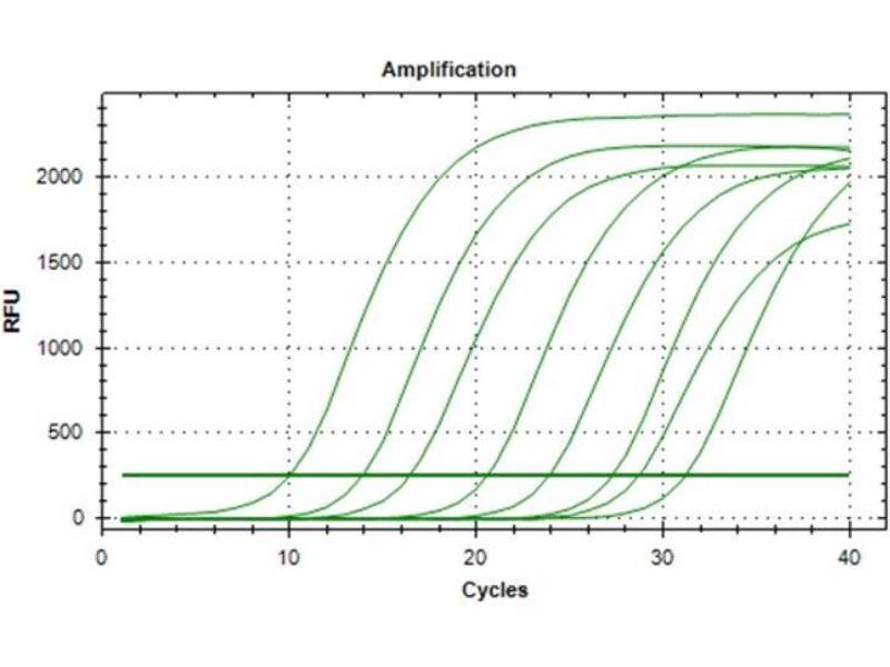 Polymerase Chain Reaction (PCR) image for Met Proto-Oncogene (MET) IQ-ELISA Kit (ABIN5680031)