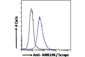Image no. 3 for anti-Anillin, Actin Binding Protein (ANLN) (C-Term) antibody (ABIN185086)