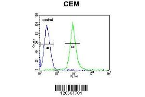 Flow Cytometry (FACS) image for anti-Hemopoietic Cell Kinase (HCK) (AA 131-156), (N-Term) antibody (ABIN652384)