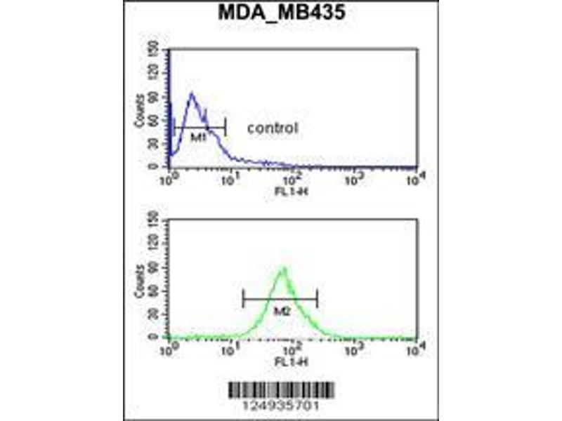 Flow Cytometry (FACS) image for anti-LUZP1 antibody (Leucine Zipper Protein 1) (AA 1042-1070) (ABIN650909)