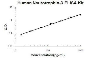 ELISA image for Neurotrophin 3 ELISA Kit (NTF3) (ABIN411338)